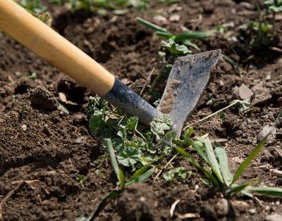 Loại bỏ mảnh vụn thực vật